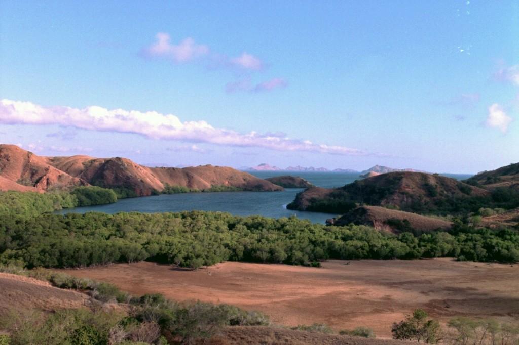 Драконы острова комодо фото 7
